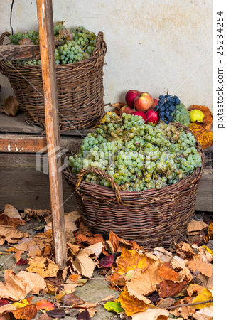 autumnal still life with fruit and leaves 25234254