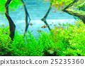 aquarium 25235360