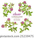 clover vector set 25239475