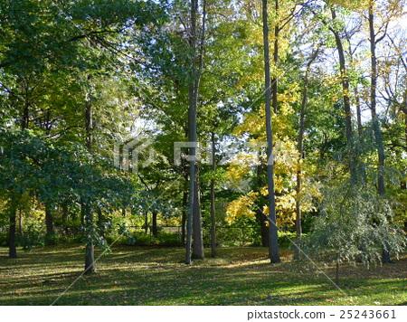 自然,風光,綠色,綠色的田野,植物園,性質,景觀,季節,環境,國際大都會,生態學,卑鄙,天體人,天空,家庭,公園 25243661