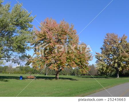 自然,風光,綠色,綠色的田野,植物園,性質,景觀,季節,環境,國際大都會,生態學,卑鄙,天體人,天空,家庭,公園 25243663