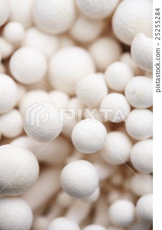 Enoki mushroom 25255284