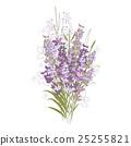 花朵 花 花卉 25255821