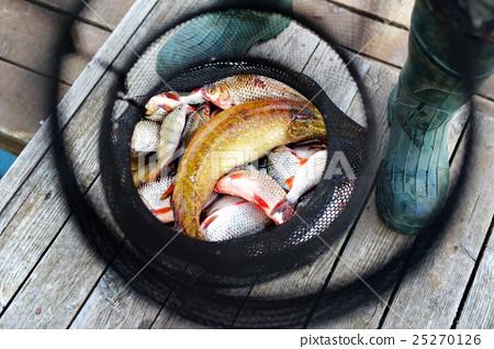 Stock Photo: Freshly caught fish in fishing net