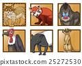 Different types of wild animals 25272530