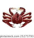 King Crab, Isolated Illustration 25273793