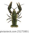 Lobster, Isolated Illustration 25273801