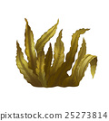 Sea Kelp, Isolated Illustration 25273814