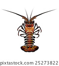 Spiny Lobster, Isolated Illustration 25273822