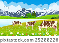 vector, farm, cow 25288226