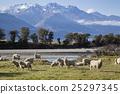 山峰 羊 綿羊 25297345