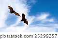 Bat silhouettes with colorful lighting 25299257