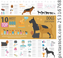 Dog info graphic template. Heatlh care, vet 25316768