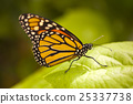 butterflies butterfly insect 25337738