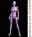 anatomy, bone, bones 25339099