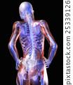 anatomy, skeleton, skeletal 25339126