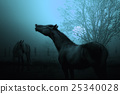 animal, horses, autumn 25340028