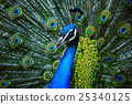 animals, bird, close-up 25340125