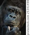 动物 猿人 猴子 25341498