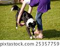 Pet obedience winnipeg