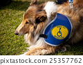 dog school, dog sport, guide dog 25357762