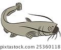 Catfish illustration on white 25360118
