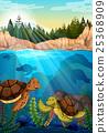 animal, turtle, sea 25368909