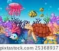 animal, fish, turtle 25368937