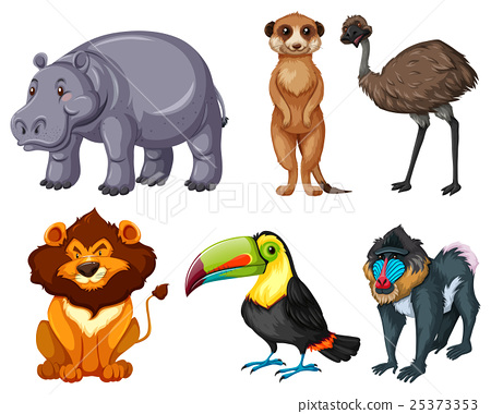 Different kinds of wild animals set 25373353