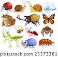 许多 很多 昆虫 25373361