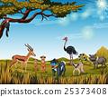 animal meerkat monkey 25373408