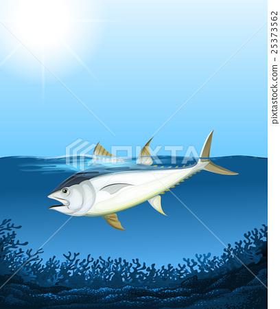 Vector illustration 25373562