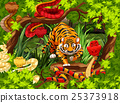 Wild snakes and tiger in the woods 25373918