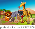 animal, giraffe, lion 25373924