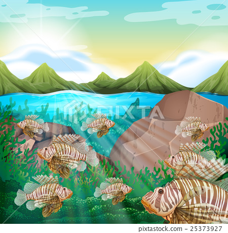 Ocean scene with lion fish underwater 25373927
