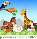 Wild animals in the field 25374022