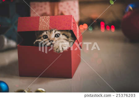 kitten playing in a gift box 25376203