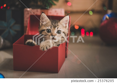 kitten playing in a gift box 25376205