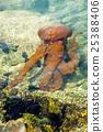 Jellyfish in a deep blue ocean 25388406