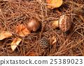 松茸蘑菇 蘑菇 秋之美食 25389023