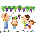 family, grape, picking 25396453