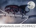 Closeup realistic tropical beetle perched 25399422