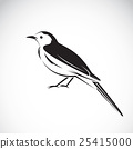 Vector of magpie design on white background. 25415000