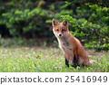 Kita狐狸的孩子们 25416949