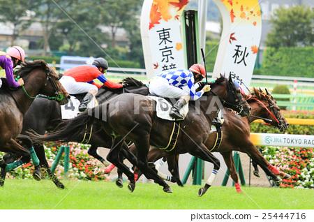 Horse race 25444716