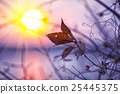 Dried foliage on a background sunset 25445375