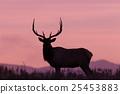 bull, elk, wildlife 25453883