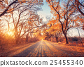 Autumn forest. Forest with country road at sunset 25455340