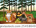 scene, wildlife, animal 25458649