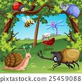 动物 瓢虫 甲壳虫 25459088